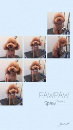 宠物美容小店Paw Paw Spaw