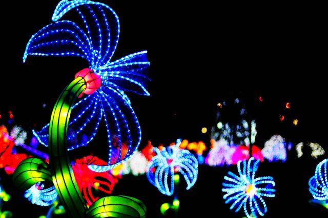 lanternfest
