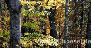 fall_8