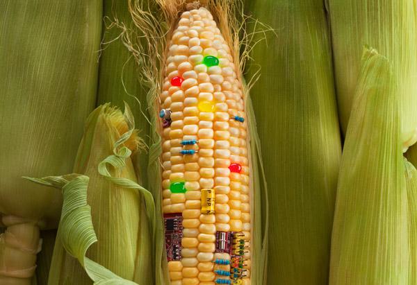 你必须要知道的美国转基因食物