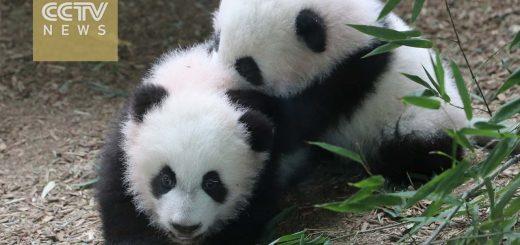 当地|还记得亚城这对华裔双胞胎吗?这周末就要满1岁了!预计将有上千美国人前去祝贺