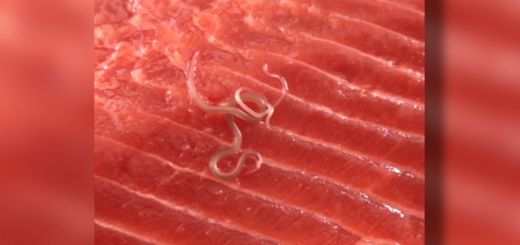 南加一妇女在Costco购买鲑鱼,回家发现里面有虫在蠕动