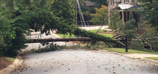 热带风暴过后,树遭殃了,你该怎么办?