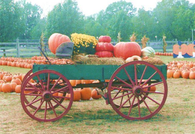 采摘季 - 南瓜节、玉米地迷宫、骑稻草堆。。。