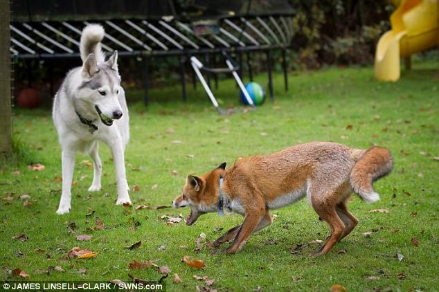 """与""""狐狸妈妈""""的甜蜜故事"""