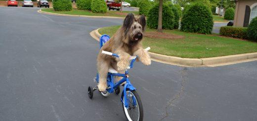 狗子凭借独门绝技成为网红,给大家带来无限欢乐同时却被诊断出淋巴癌……