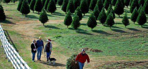 圣诞节到了,和我一起买树去吧!