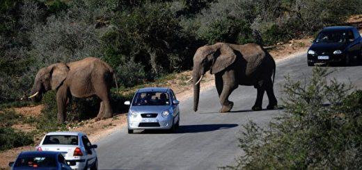 乔州筹建野生动物园Georgia Safari!