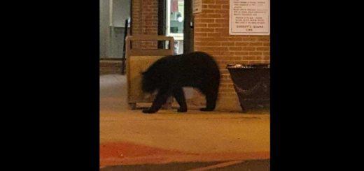 熊出没 | 黑熊惊现亚城监狱,MARTA车站,溜达了
