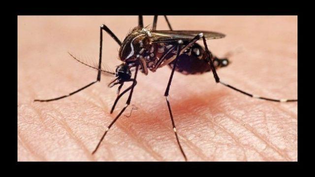 当地   西尼罗病毒惊现亚城!请出门做好防护措施!