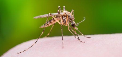 当地 | 西尼罗病毒惊现亚城!请出门做好防护措施!