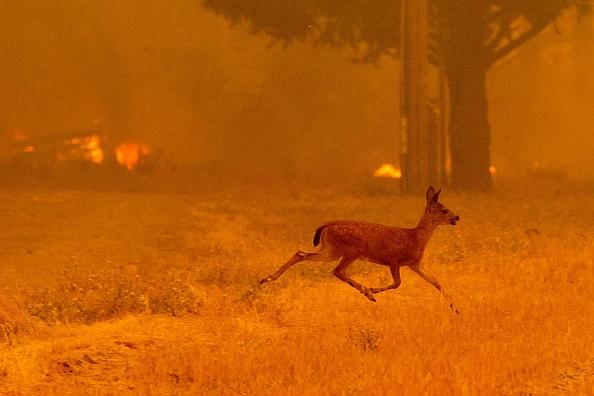 为加州祈祷平安!史上最大山火蔓延 火势暴增25%