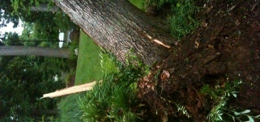 邻居家的树倒你家院子里,咋整?