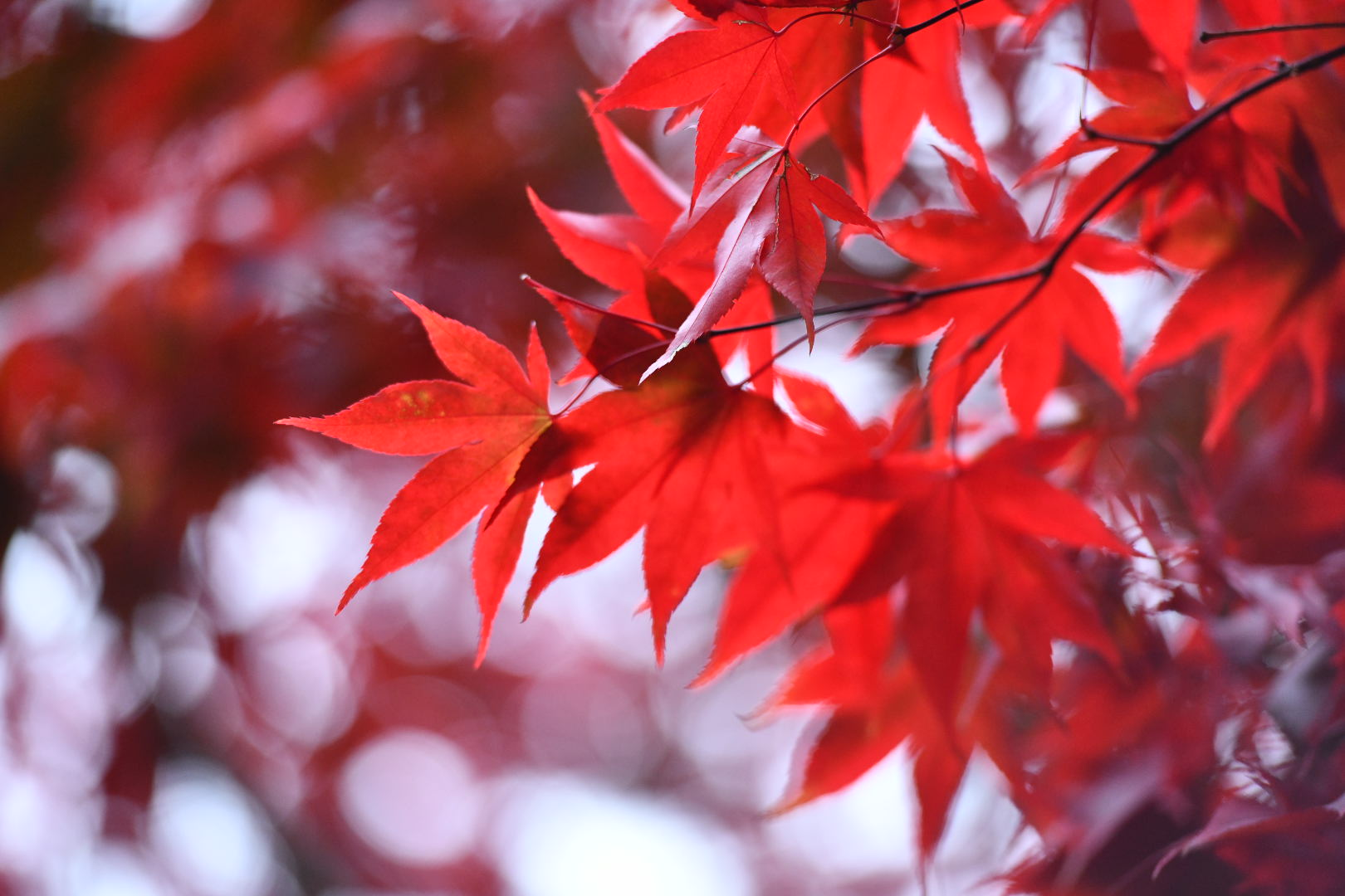 北美华人摄影协会诚征《镜头下的秋色》摄影作品通知