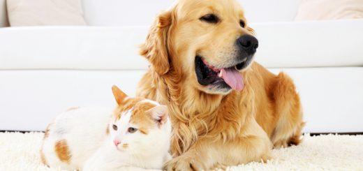 健康| 从猫狗宠物身上易得的10种疾病 美国兽医协会教您如何预防