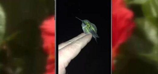 特种兵四年前救下一只蜂鸟,今后每年春天,小蜂鸟都会回来看望他
