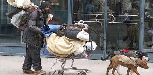 兽医认为:西雅图部分瘾君子利用宠物受伤骗取阿片类药物