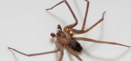 堪萨斯女子总觉耳朵里有水 结果医生取出了一只毒蜘蛛