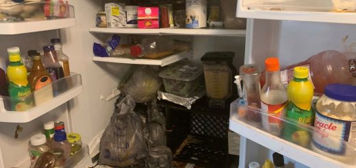 """佛州一住宅6人与245只动物同住 """"到处是动物屎尿"""""""