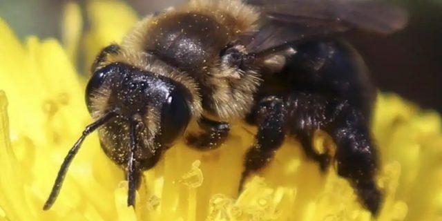 恐怖! 男子家门口剪草遭60000只蜜蜂袭击 当场惨死! 华人亲述经历 这样做可以救人一命