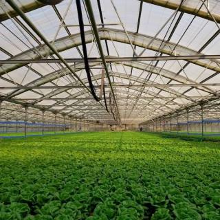 投资1,800万美元!温室农业公司Pete's计划在佐治亚州设立其美国东部首家室内农场!